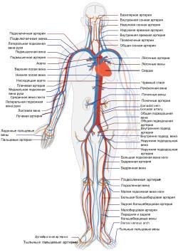 Современное диагностическое оборудование и его возможности для Елезоветовки
